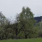 150425 Schauenberg