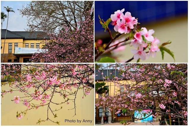 麗池櫻花6