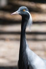 Crane Profile