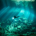 Cenotes diving by edouardfourcade