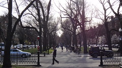 Commonwealth Avenue