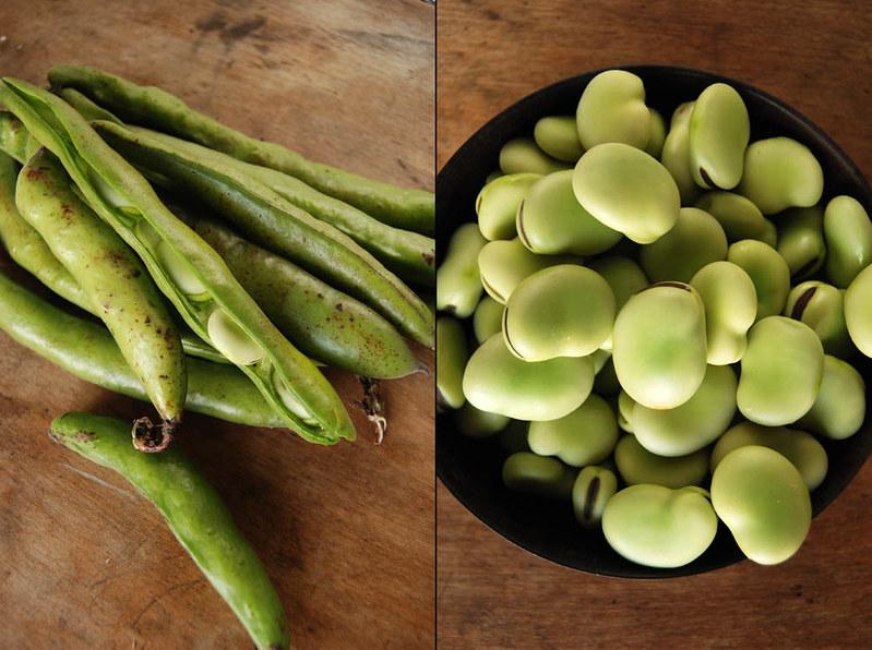 favas / fava beans