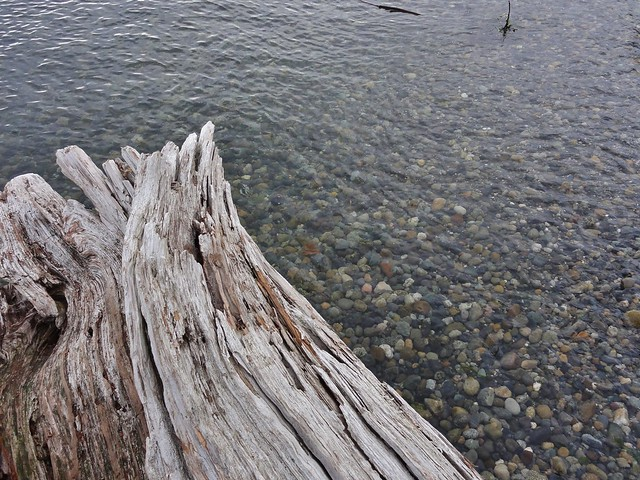 Driftwood log and the sea sloshing over the cobbly shore at Lincoln Park, Puget Sound.