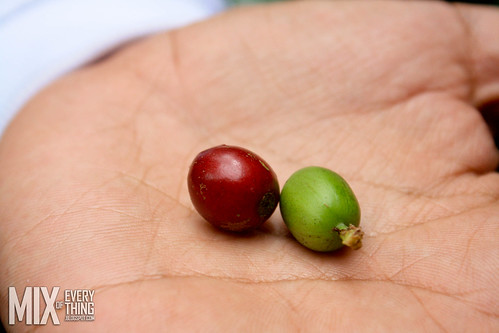 Organic Coffee Farming