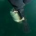 Grey Seal pup by chrisrobs