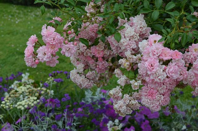 Chateau de Chenonceau flowers in garden