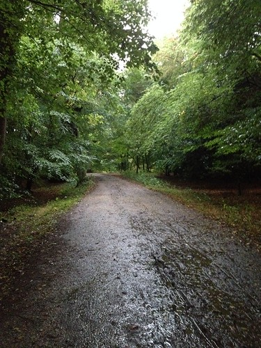 Epping Forest - rainy October morning