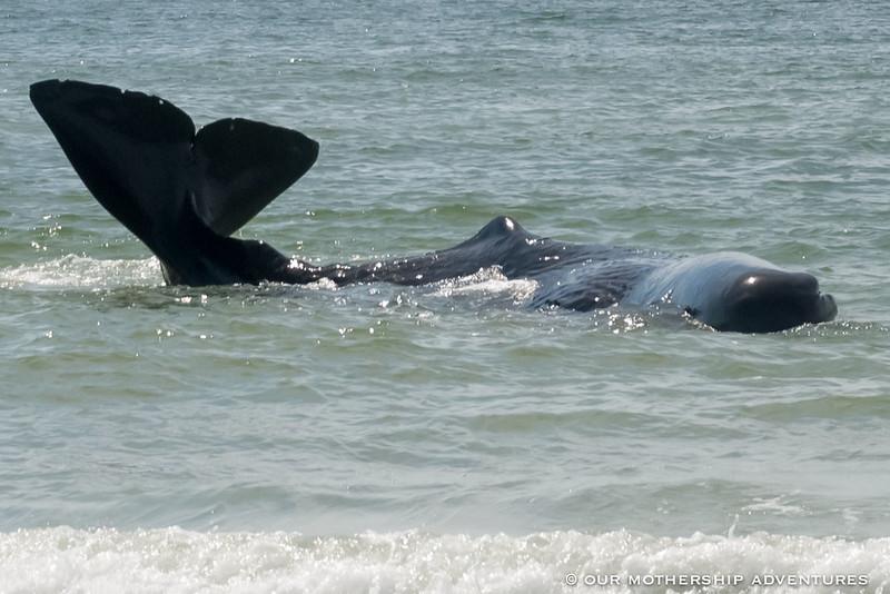 Whale7.8