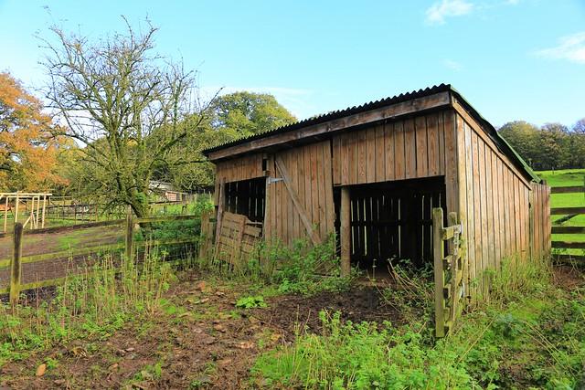 13-11-10 Animal Feeding Time, Coombe Mill Farm, Cornwall