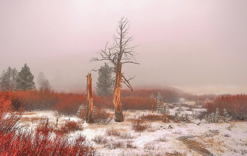 fog landscape elements laketahoebasin mtrosemeadow