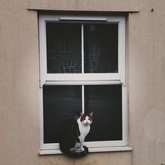 picture frame(0.0), interior design(0.0), door(0.0), window(1.0), wall(1.0), window screen(1.0), window covering(1.0),