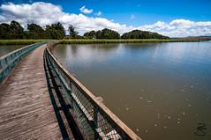 Tamar Island Wetlands Reserve Boardwalk