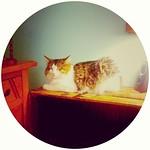 Look it's @camimari's fat cat! cute cute cute! But sneaky!