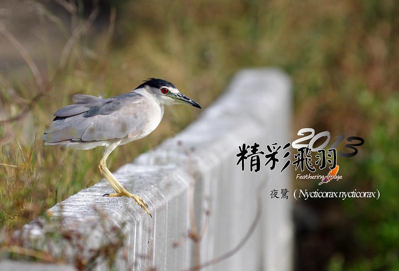 精采飛羽 - 2013 !!