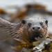 Skye Otter by Chris Sharratt