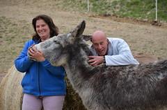llama(0.0), kangaroo(0.0), camel-like mammal(0.0), animal(1.0), donkey(1.0), pack animal(1.0),