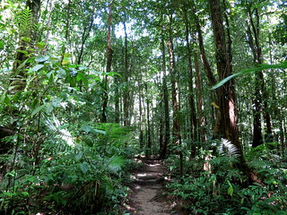 Walking track at Mossman Gorge rainforest