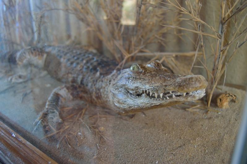 lara-vazquez-madlulablog-crocodrile