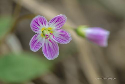 Spring Woodland Flower
