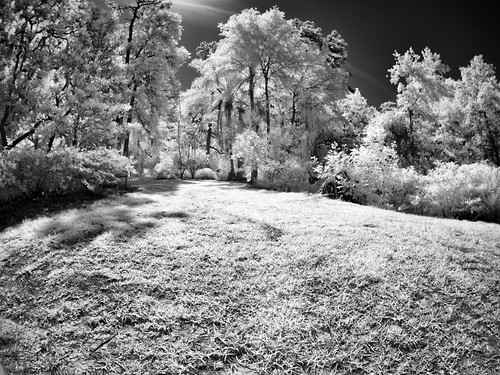 blackandwhite bw usa white black tree grass landscape ir orlando florida fisheye infrared centralflorida 75mmf35rokinon edrosack