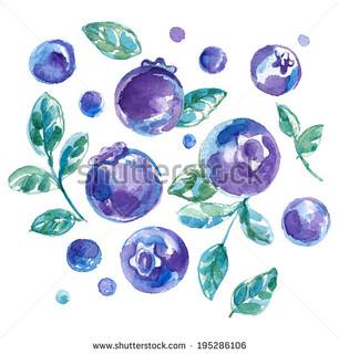 stock-photo-blueberry-195286106