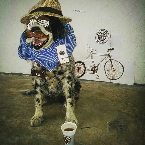 Pecas, the hipster dog