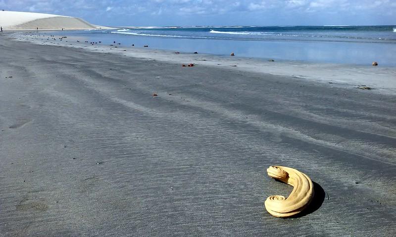 todo mundo já catou concha na praia, Jericoacoara, 2016. (9)
