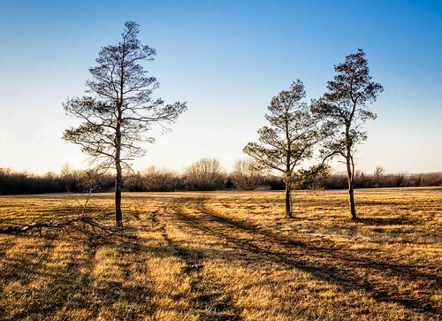 canada grimsby landscape ontario path tree cold field nature niagara outdoors photography sky winter trees golden hour sunset goldenhour
