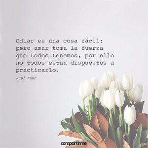 Imagenes De Flores Hermosas Con Frases Sobre El Amor Flickr