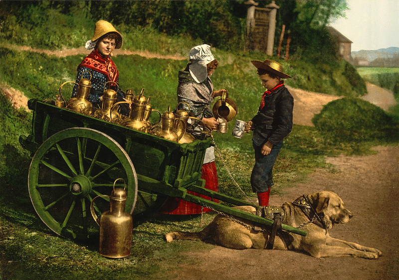 15) Dogcart