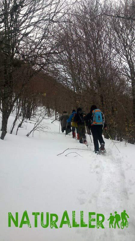 Raquetas de nieve bosque