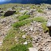Small photo of Little flora thrive in Alpine Tundra