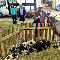 Petting zoo at the brocante (flea market) at Champvert, France. - Photo of Thianges