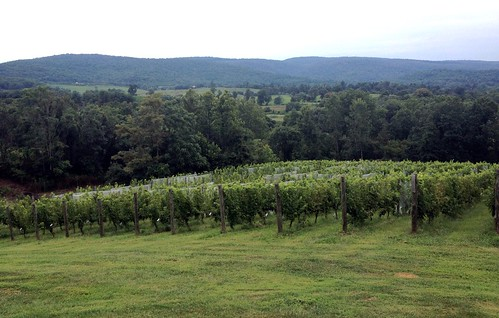 Vines at Chateau O'Brien
