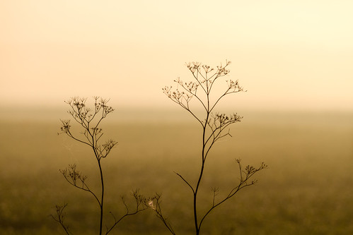 morning light plants field fog sunrise canon illinois midwest troy september fields 2013 eos7d