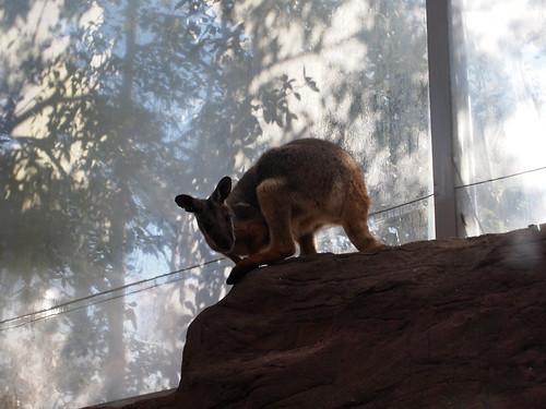 P9146544 WILD LIFE SYDNEY ZOO シドニー動物園