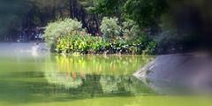 Lake View (1)