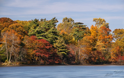 Connetquot River in Autumn by Alida's Photos