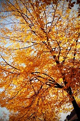 Bunter Herbst 3