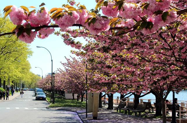 Roosevelt Island | O que ver em New York