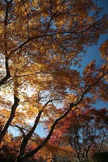 紅葉 at 強羅公園