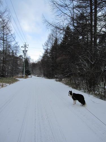 朝の散歩 2013.12.12 by Poran111