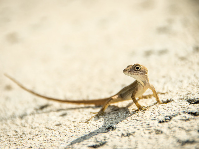 lizard eye to eye