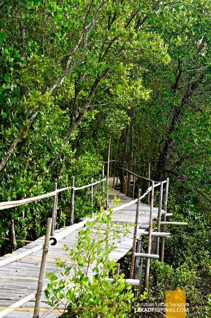 Zigzag Pathway at Kalibo's Bakhawan Eco Park