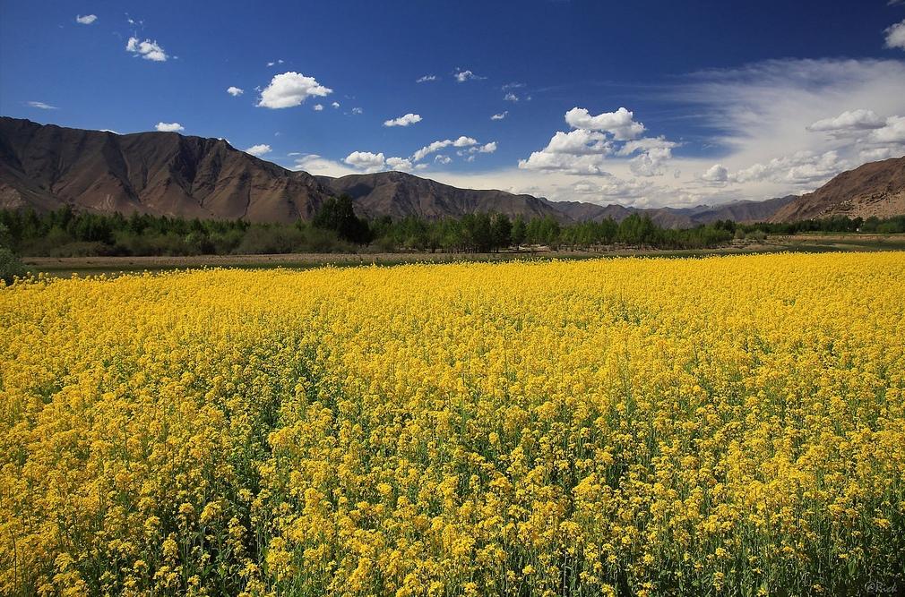 2. Bucólico Tibet. Autor, Rickz