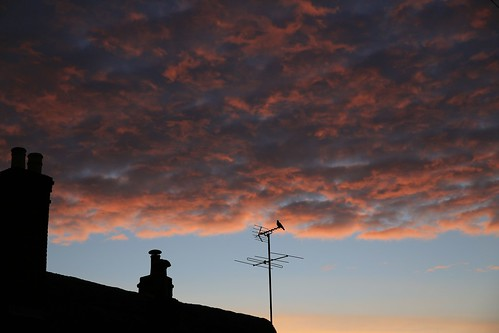 roof sky house bird night clouds sunrise dawn cloudy alba cielo