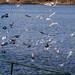 Edg_Res_Birds-14.jpg