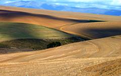 erg(0.0), tundra(0.0), plain(0.0), hill(0.0), plateau(0.0), badlands(0.0), prairie(1.0), steppe(1.0), horizon(1.0), ecoregion(1.0), field(1.0), soil(1.0), sand(1.0), aeolian landform(1.0), natural environment(1.0), desert(1.0), fell(1.0), dune(1.0), landscape(1.0), grassland(1.0),
