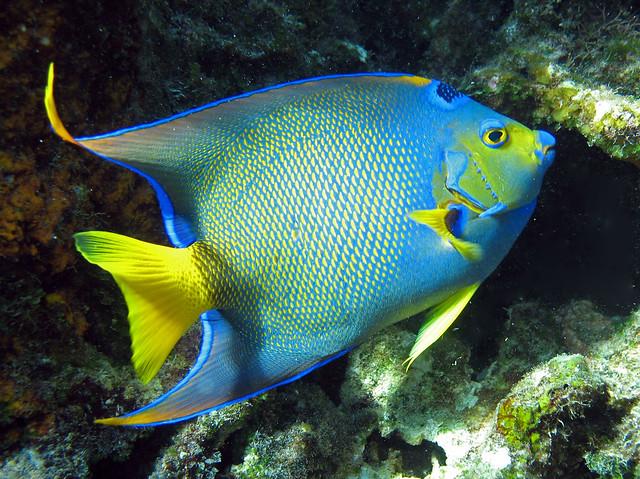 Flickr: The Angelfish - Saltwater Beauties Pool