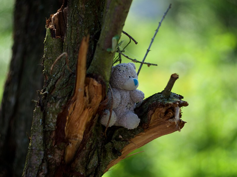 Photograph Winnie-the-Pooh in the country of Giants (1 story) by Andrew Barkhatov on 500px